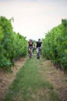 velo dans les vignes ©Laurent Moulin